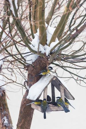 Biała drewniana karmnik z wieloma ptakami - żółta modraszka na ośnieżonym zimowym drzewie Zdjęcie Seryjne