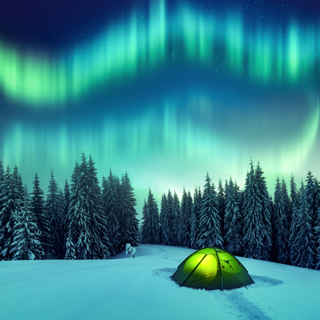 Aurora borealis. Northern lights in winter forest. Sky with polar lights and stars. Night winter landscape with aurora, green tent and pine tree forest. Travel concept Standard-Bild