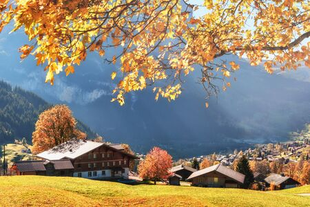 Picturesque autumn landscape with yellow leaves and wooden houses in Grindelwald village in Swiss Alps Standard-Bild - 130760038