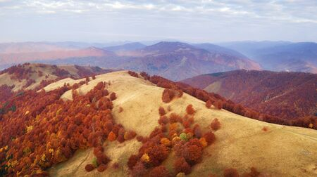 Autumn mountains and red beech forest in the Carpathian mountains, Ukraine. Aerial drone view on beautiful mountain landscape at sunrise