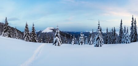 Panorama of winter landscape with snowy trees. Carpathian mountains, Ukraine, Europe. Christmas holiday concept 版權商用圖片