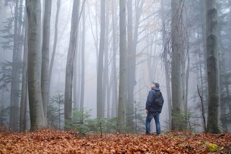 Man in the mysterious dark beech forest in fog. Autumn morning in the misty woods. Magical foggy atmosphere. Landscape photography 版權商用圖片