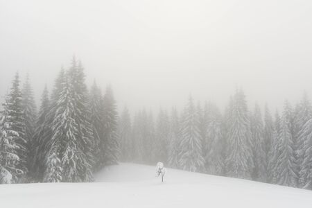 Fantastic winter landscape with snowy trees in foggy mountains. Carpathian mountains, Ukraine, Europe. Christmas holiday concept 版權商用圖片