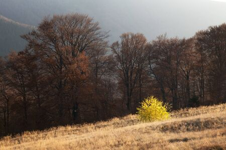 Picturesque autumn mountains with red beech forest in the Carpathian mountains, Ukraine. Landscape photography 版權商用圖片