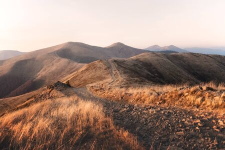 Yellow grass trembling in the wind in autumn mountains at sunrise. Carpathian mountains, Ukraine. Landscape photography 스톡 콘텐츠
