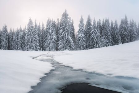 Fantastic winter landscape with frozen river and snowy trees in foggy mountains. Carpathian mountains, Ukraine, Europe. Christmas holiday concept 版權商用圖片
