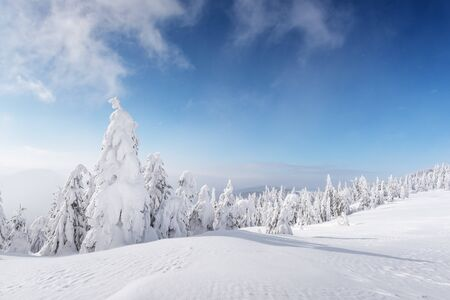 Fantastic winter landscape with snowy trees and blue sky. Carpathian mountains, Ukraine, Europe. Christmas holiday concept