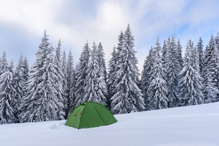 Green tent against the backdrop of foggy pine tree forest. Amazing snowy landscape. Tourists camp in winter mountains. Travel concept 版權商用圖片