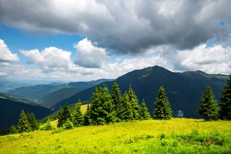 Lush green grass covered mountains meadow in summer time.