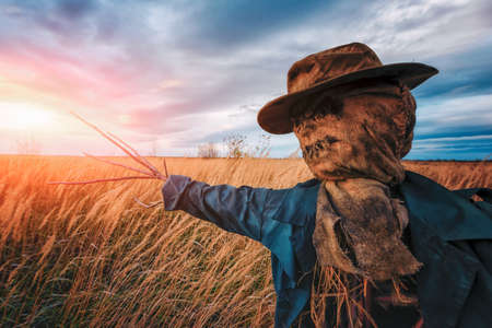 Terrible scarecrow in dark cloak and dirty hat stands alone in a autumn field at sunset time. Halloween background