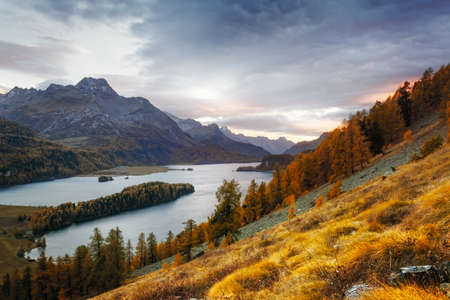 Gorgeous view on autumn lake Sils (Silsersee) in Swiss Alps mountains. Colorful forest with orange larch. Switzerland, Maloja region, Upper Engadine. Landscape photography