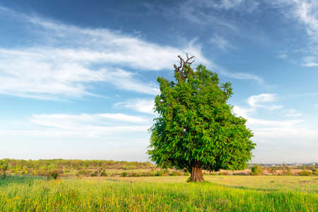 Summer meadow with beautiful tree and lush green grass. Landscape photography