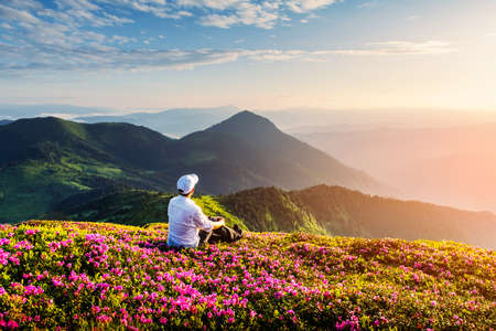 A tourist in white clothes sits on a pink carpet of rhododendron flowers that cover a mountain meadow in summer. Carpathian mountains, Europe. Landscape photography