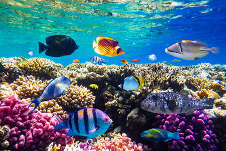 Different tropical fish on a coral reef in the Red Sea