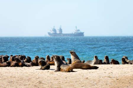 Fur seal colony enjoy the heat of the sun