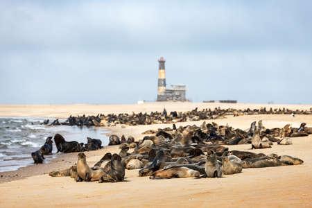 Fur seal colony near Walvis Bay lighthouse Standard-Bild