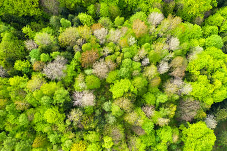 Aerial drone photo looking down on magical spring summer fores
