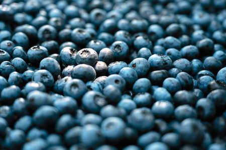 Fresh sweet blueberry berries closeup