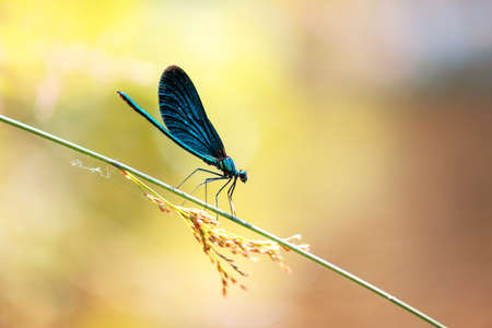 Beautiful nature scene with dragonfly