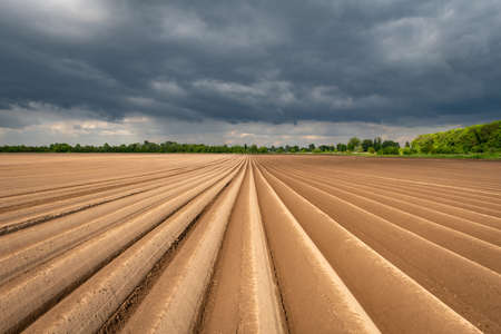 Agricultural field with even rows in the spring