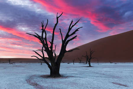 Dead Camelthorn Trees at sunrise 版權商用圖片