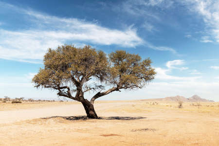 Tupical landscape of Namibia, Africa