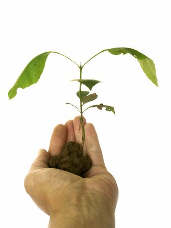 renewing: isolated hand showing growth