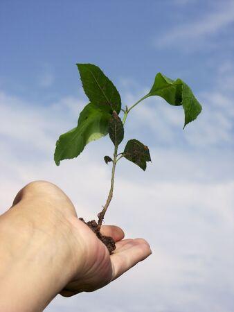 renewing: new growth