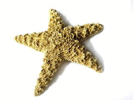 bumpy: isolated starfish with shadow