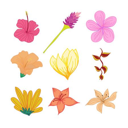 Various Tropical Flowers Hand Drawn Vector Illustration Design Set