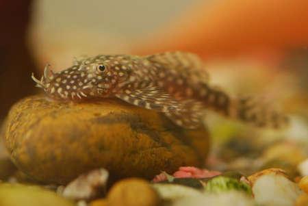 detail of Tropical fish macro image Stock Photo - 2715812