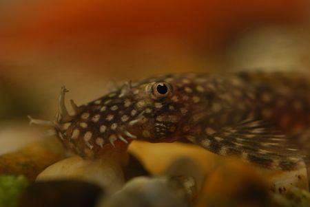 detail of Tropical fish macro image Stock Photo - 2715859