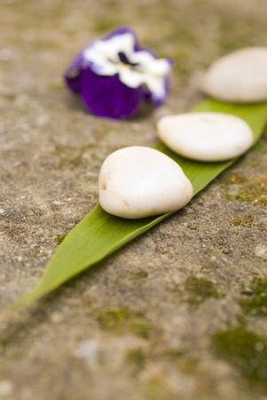 zen Aromatic flower and stones photo