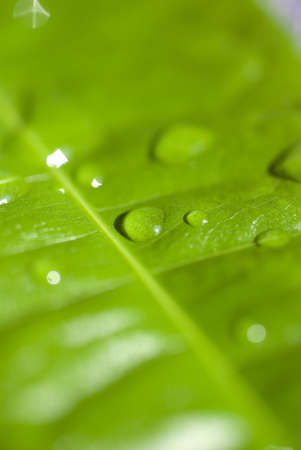 water drops on green leaf  photo
