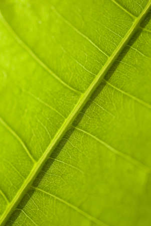 green  leaf macro, botanical background Banco de Imagens
