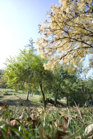 Green field and Autumn trees  Landscape Stock Photo - 3001595
