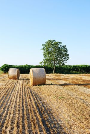 Straw bales on italian farmland with blue sky photo
