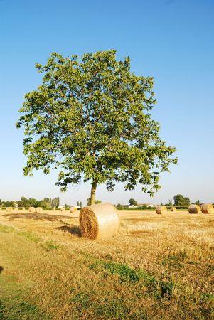 Straw bales on italian farmland with blue sky Stock Photo - 3368572