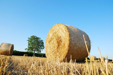 Straw bales on italian farmland with blue sky Stock Photo - 3371387