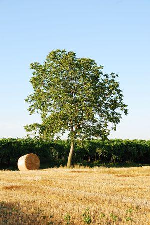 Straw bales on italian farmland with blue sky Stock Photo - 3371409