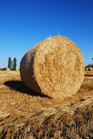 Straw bales on italian farmland with blue sky photo