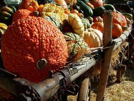 colorful arrangement of orange yellow and green decorative pumpkins