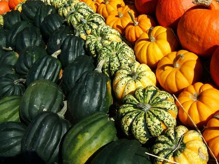 colorful arrangement of orange yellow and green decorative pumpkins photo
