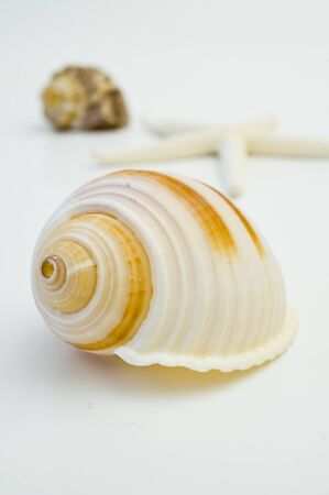 Sea shell on white background Stock Photo - 4303927