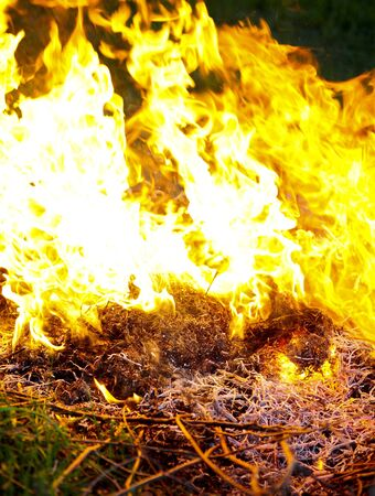consuming: Fire flames raising, Burning fire close-up