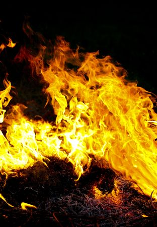 Fire flames raising, Burning fire close-up Stock Photo - 4600020
