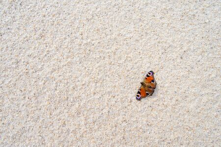 nymphalis: sand background and Nymphalis io butterfly as a touch of colors Stock Photo