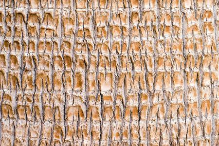 palm tree trunk texture closeup Stock Photo - 1887789