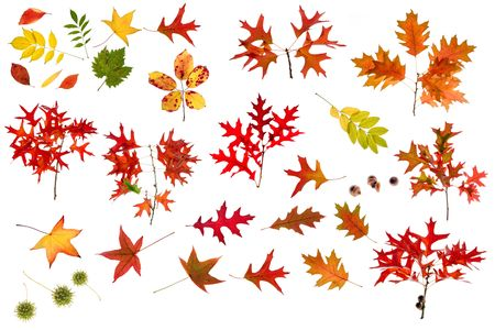 many leaves, branchs and seeds isolated on white, high resolution