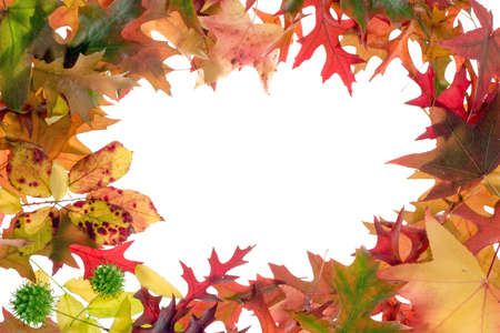 fall leaves frame on white background Stock Photo - 2052946